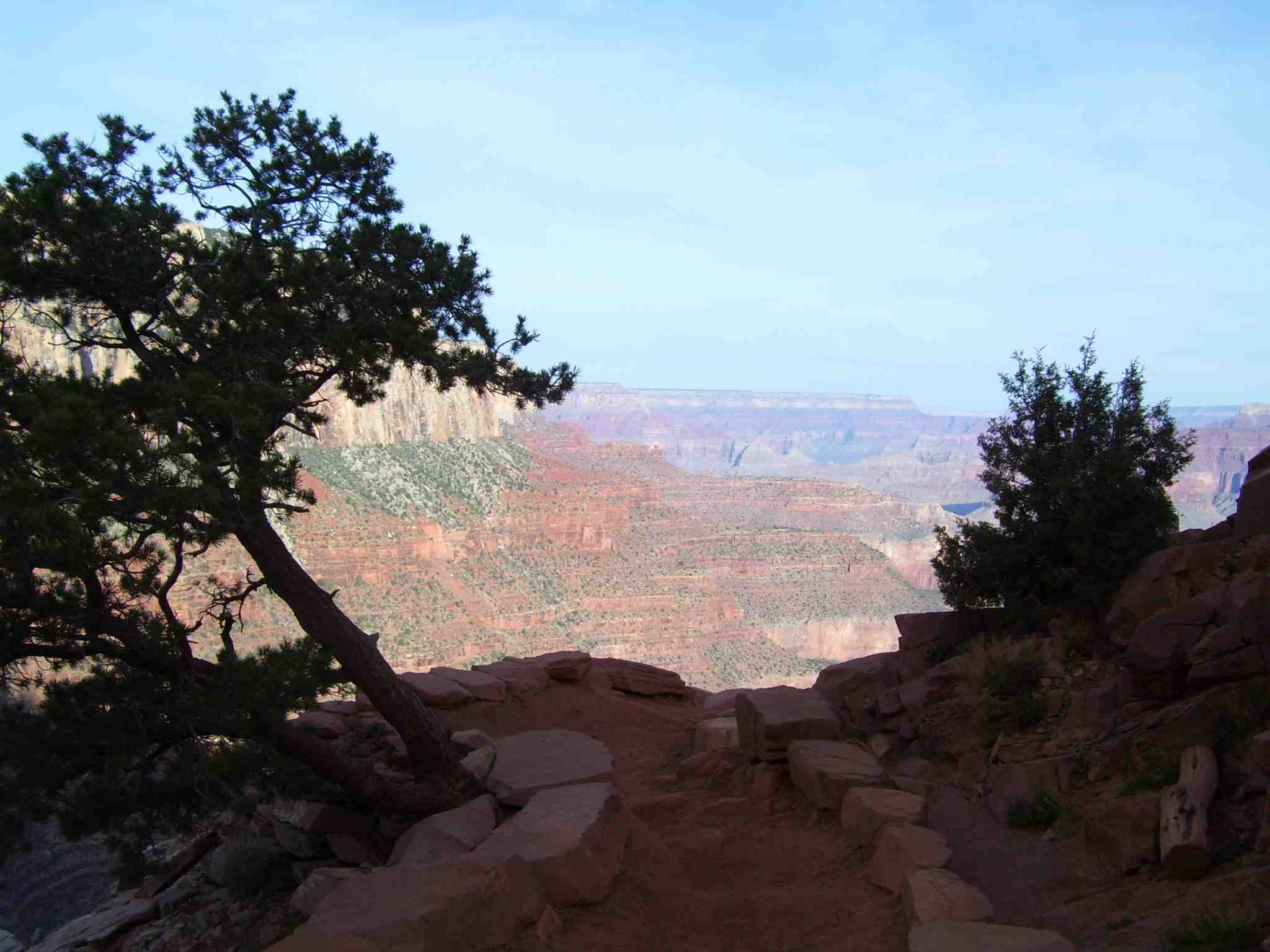 Photo of Grand Canyon with trees in the foreground
