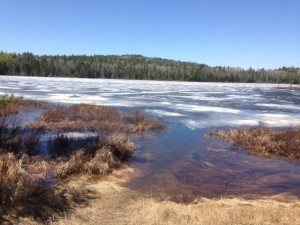 Picture of Iron Lake in Cook County Minnesota. It is still partially frozen.