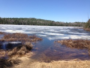 Picture of Iron Lake on the Gunflint Trail, showing quite a bit of ice on the water