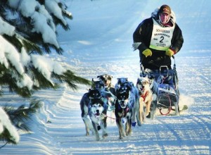 Picture of Nathan Schroeder and his dogs competing in the John Beargrease sled dog race