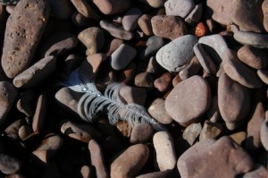Rocks-and-feather-Grand-Marais