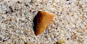 Picture of a cigarette butt in the sand