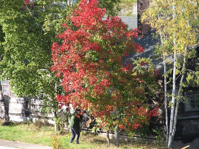 Picture of a colorful tree in Grand Marais. On the left side of the picture, you can see a man taking a picture of the building in the background.