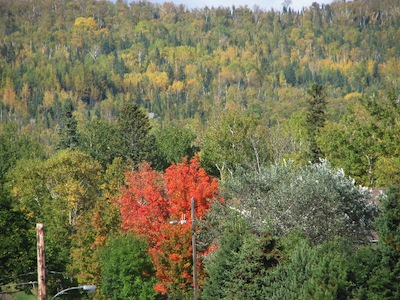 Autumn tress in Grand Marais MN. There is a bright red tree in the foreground.