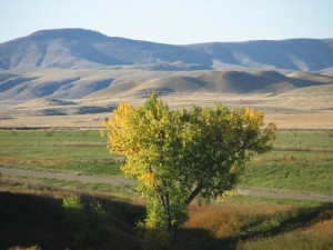 Montana picture with tree in the foreground and hills in the background