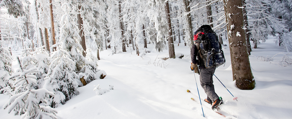 Picture of cross country skier along a wooded path