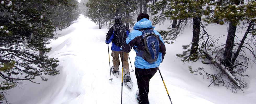 Picture of two people snowshoeing on a path through trees