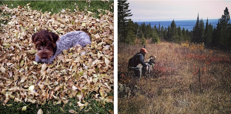 Two pictures of dogs in the leaves of autumn. Oh yea, there's a human in one of them too.