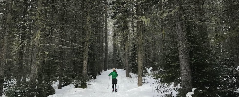 Picture of a cross-country (Nordic) skier in the boreal forests of Northeastern Minnesota