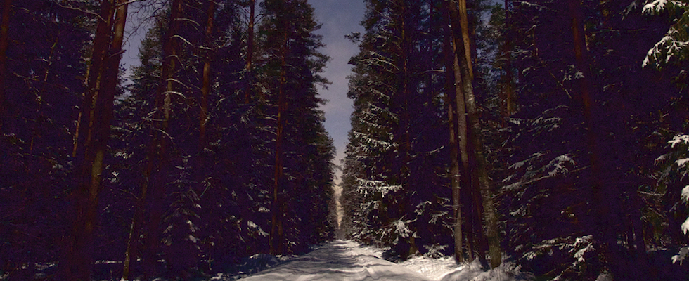 Picture of a Cook County cross-country ski trail at night