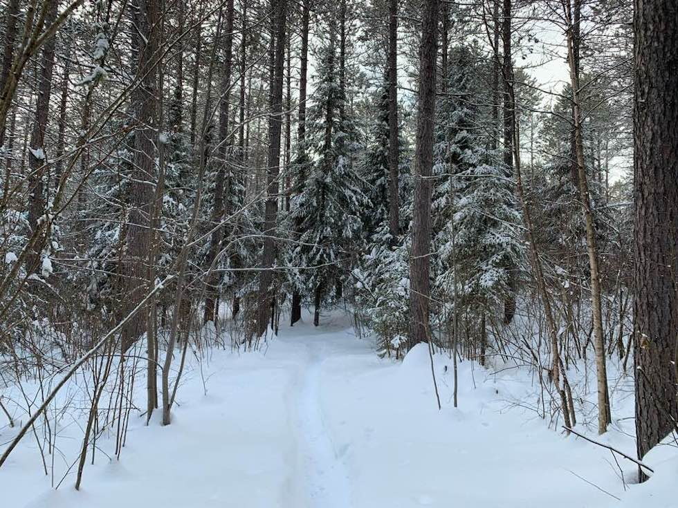 Snow-covered trees on a backcountry ski trail in Grand Marais MN