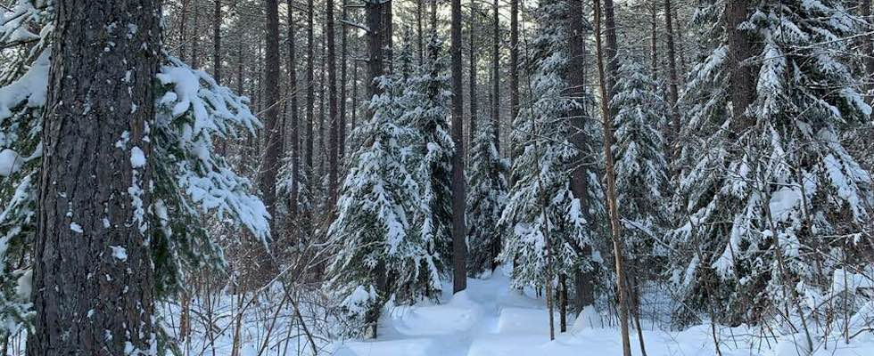 Picture of a snowy back-country ski trail in Grand Marais MN